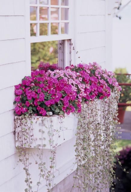 window box idesa