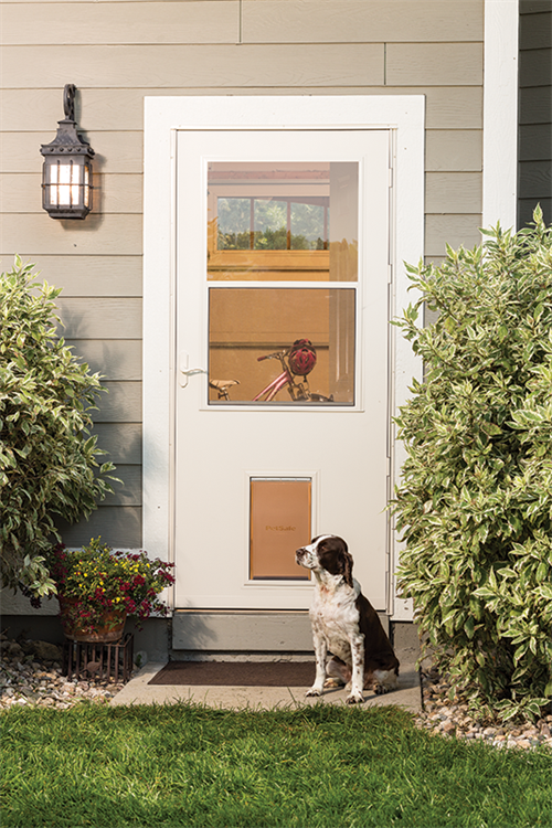 3 Dog Friendly Home Improvements Tips