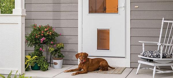 The New Storm Door Is A Pet Too